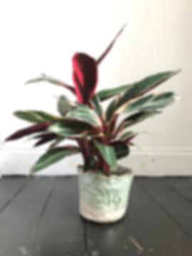crackle gree planter