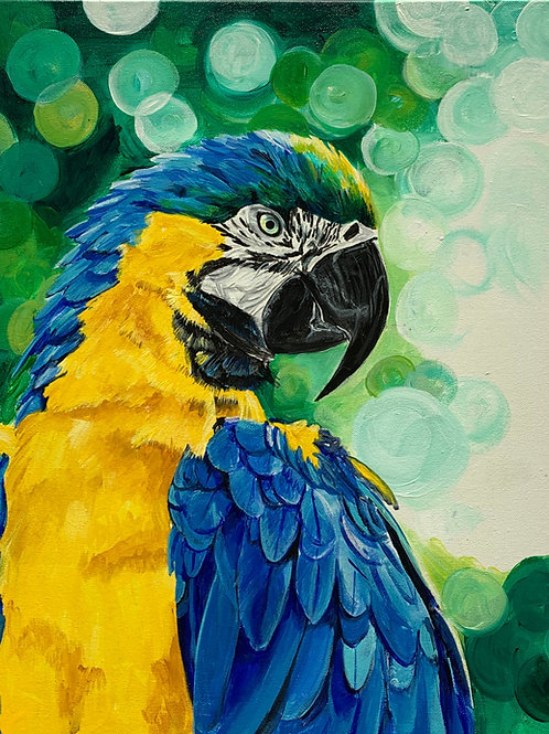 Tropical Macaw - SIGNED Print