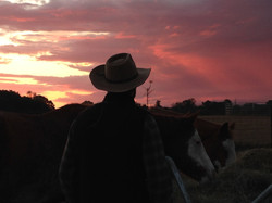 Cowboy in sunset