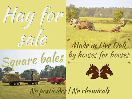 Square bales hay made by horses for horses no pesticides and chemincal free