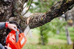 cutting-tree-09262018-min.jpg