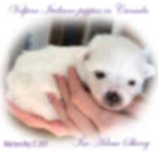 lola-male-pup-6-3-19.jpg