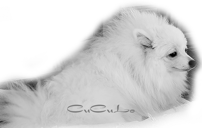 cuculo-2-6-19