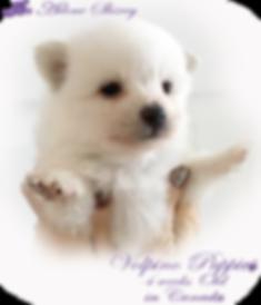 lola-pup-4weeks.png