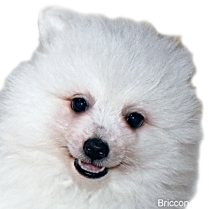briccone-4.png
