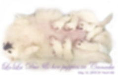 lola-7-puppies-24hrs-5-18-19.png
