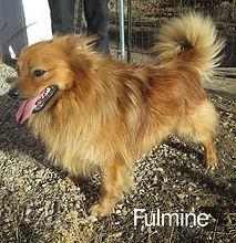 Fulmine-IMG_4251.jpg