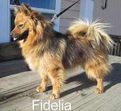 Fidelia-IMG_4244.jpg