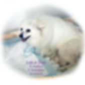 lola-6puppies-5-17-19.png