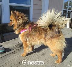 GINESTRA-IMG_4236.jpg