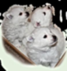 fabiola-pups4-12-13-19.png