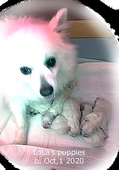 Lola-pups-10-1-2020.png