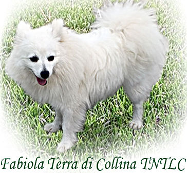 Fabiola is a Rare Breed called Volpino Italiano from Italy