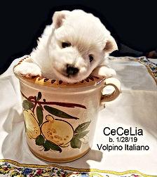 cecelia-2-22-19.jpg