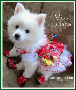 miss-lillianna-2016.jpg