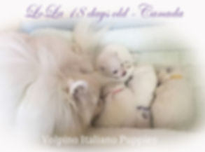 lola-pups_18-days-old.jpg