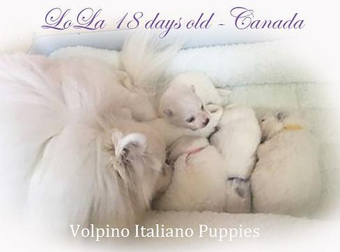 lola-pups_18-days-old.jpg