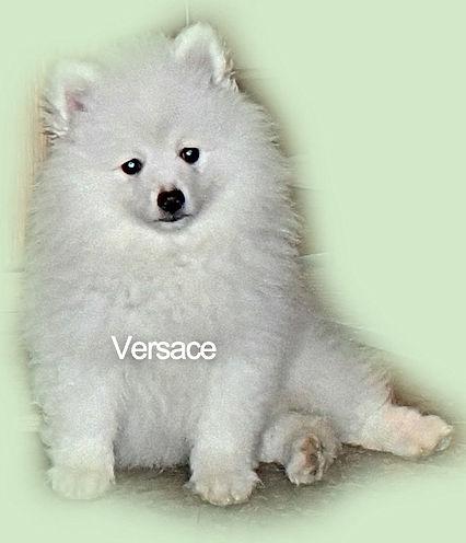 Versace-1-23-20.web.pg.jpg
