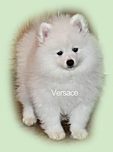 Versace-5-1-23-20-web.jpg