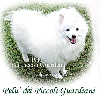Pelu dei Piccoli Guardiani Volpino Italiano