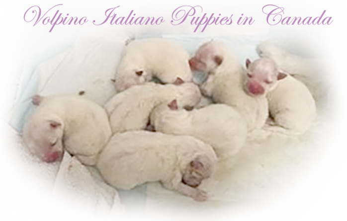 lola-7-puppies-5-18-19.png