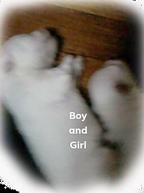 boy-girl.png
