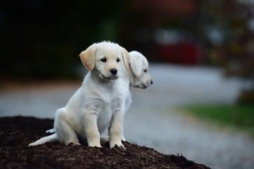 658 puppies.jpg