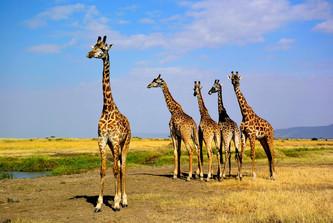 AFRICA 2015 13265.jpg