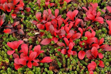 Tundra Color Alaska0012.jpg