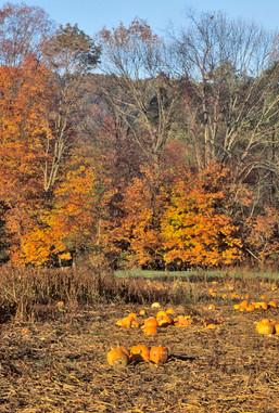 PA fall foliage 69.jpg