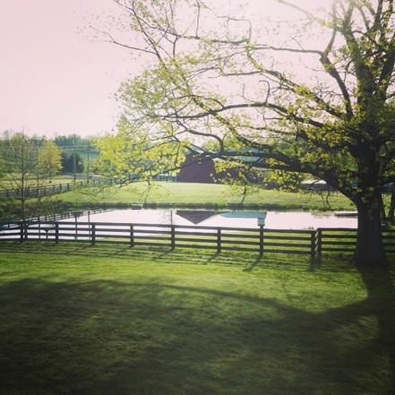 View of Pond_1470.jpg