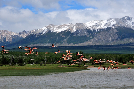 2010 flamingo's patagonia 1115.jpg