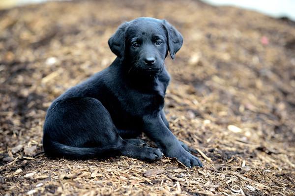 665 puppies.jpg