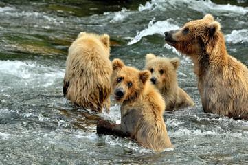grizzly -club  b&c beck image020.jpg
