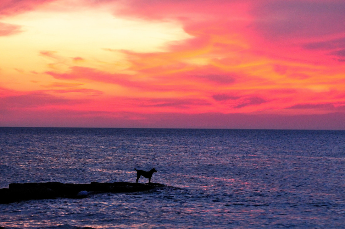 Dog and sunset 0504 .JPG