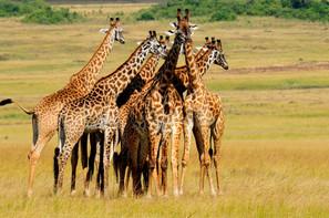 AFRICA 2015 7982.JPG