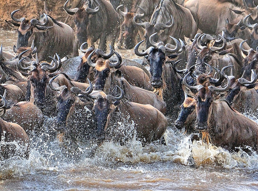 AFRICA 2015 855.jpg