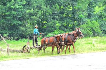 amish farmer  2388.jpg