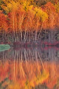 PA fall foliage 68.jpg