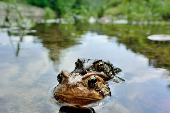 58 toads 2020.jpg