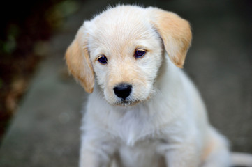 818 puppies.jpg