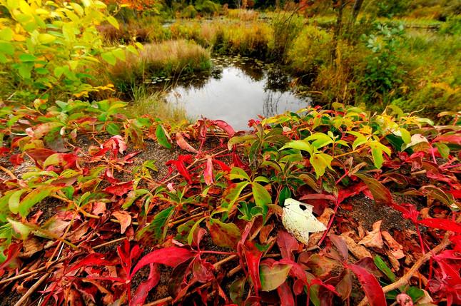 Pa, 08 fall color0045.jpg