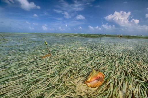 Turneffe Belize 03_Nik_HDR.JPG