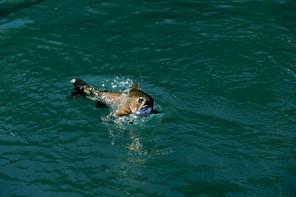 1431ARGENTINA WATERS .jpg