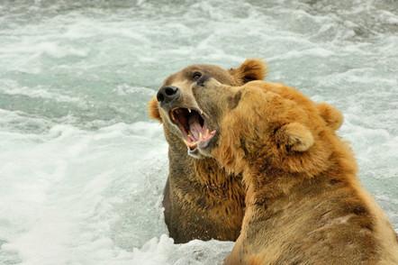 alaska grizzly0008.jpg