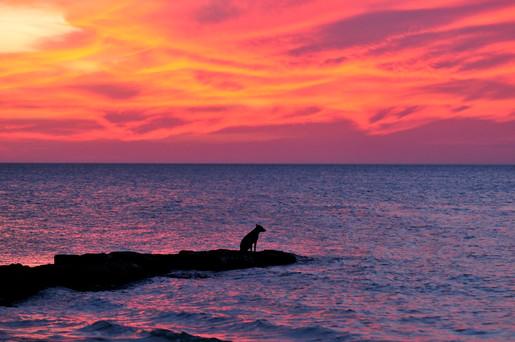 Dog and sunset 0500 .jpg