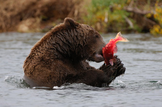 october grizzly b&c beck image57.jpg