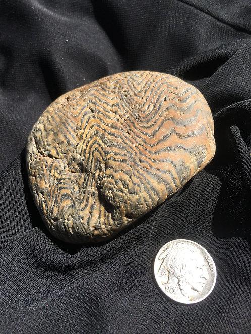 Herringbone Sequoia