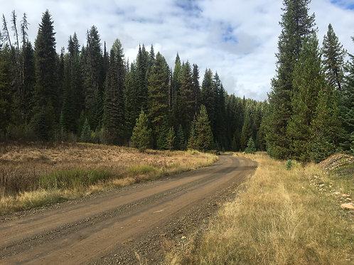 Deadwood Creek #1