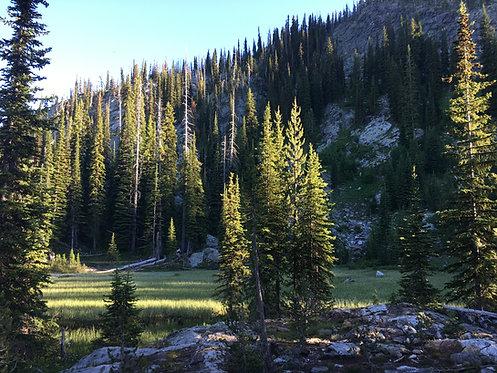 Creek & Lake Placer